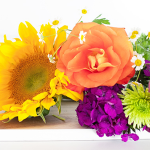 Perennials, Roses & Shrubs Seminar