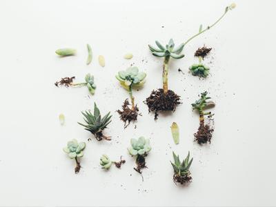 Succulents-list | Dutch's Greenhouse